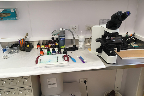 病理診断用顕微鏡